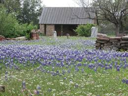 buffalo gap blue bonnets